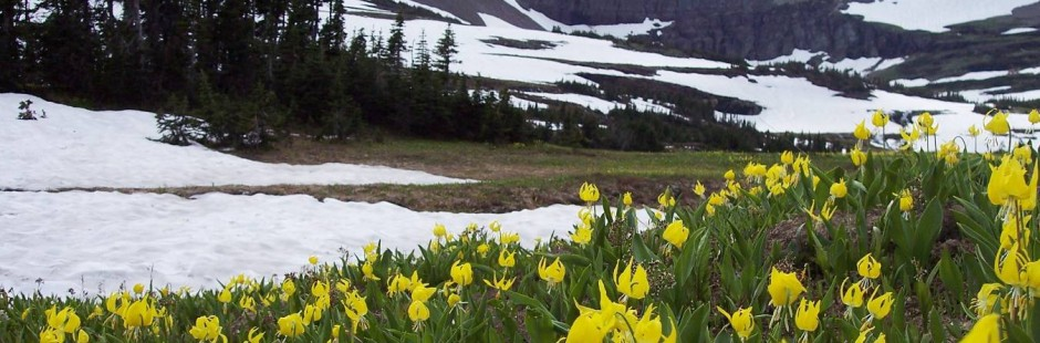Spring and Logan Pass